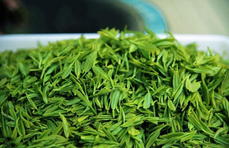 Trà xanh có nguồn gốc từ lá và búp của cây trà