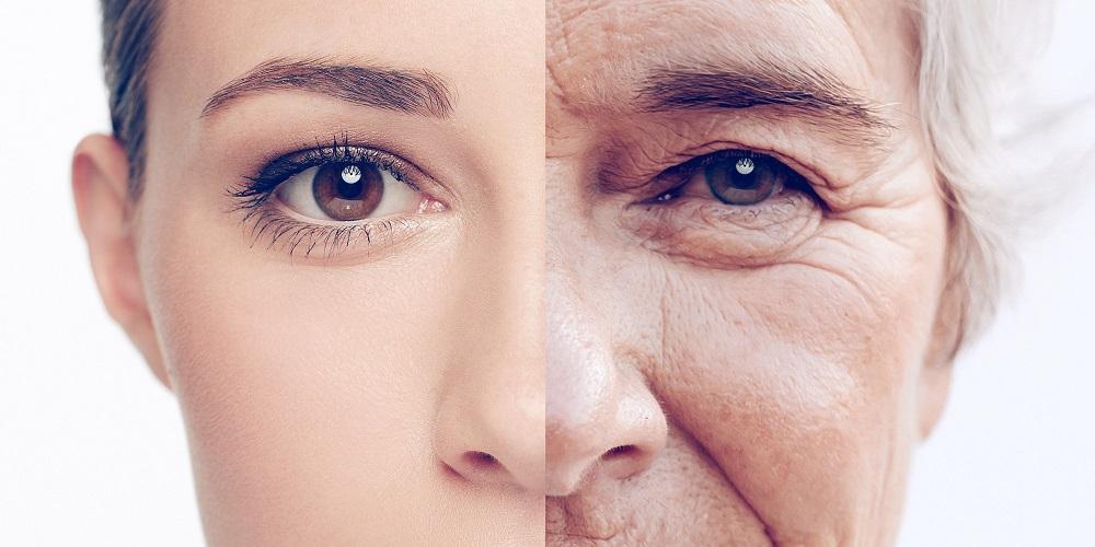 Ferulic acid bảo vệ da trước những khúc xạ đồng thời giúp ngăn ngừa, hình thành nếp nhăn