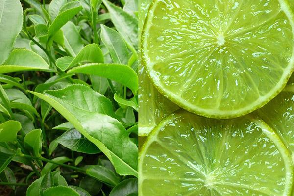Trà xanh và chanh hỗ trợ giảm cân cực tốt