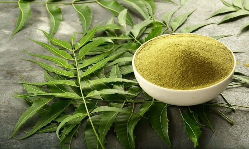 Bột lá neem trị mụn sưng và vết thâm